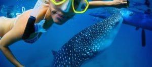 Shark Diving Holidays