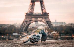 Honeymoon-Paris